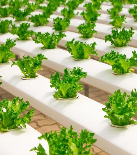 irpr hydroponics web design